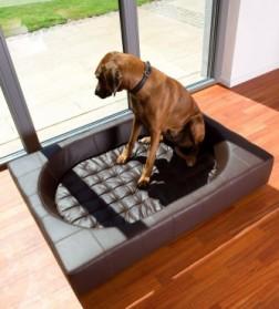 Quel couchage choisir pour un grand chien ?