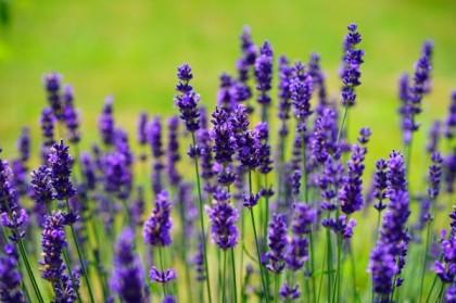 La Provence, une région en plein essor