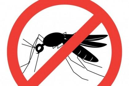 Aperçu sur les 4 plantes anti-moustiques
