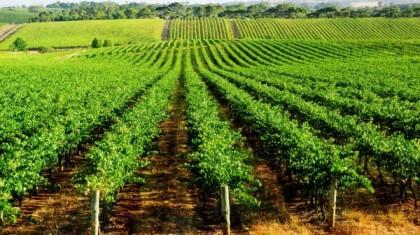 Pourquoi investir dans l'achat d'un domaine viticole