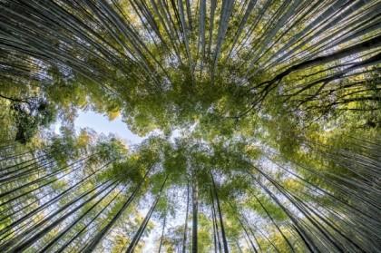 Avantages d'intégrer une haie en bambou dans son jardin