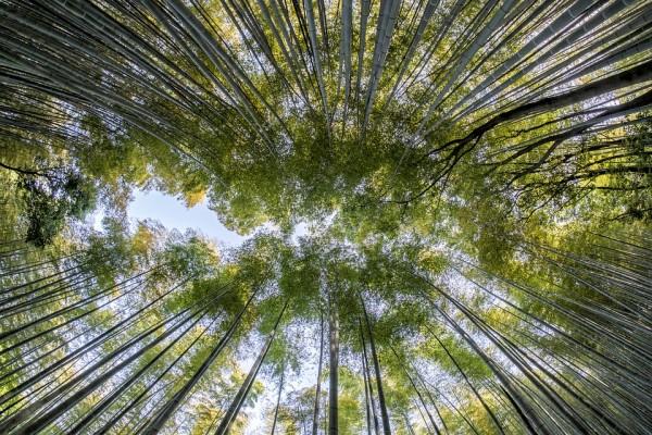 Avantages d\'intégrer une haie en bambou dans son jardin