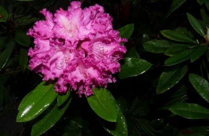 La rose éternelle, un cadeau insolite à la mode