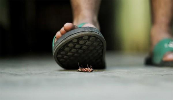 Solution anti-cafards : les actions pour les combattre