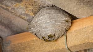 Quelques conseils pour se débarrasser des nids de guêpes