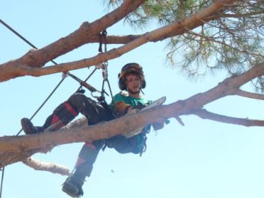 La multiplicité des types travaux d'élagage des arbres