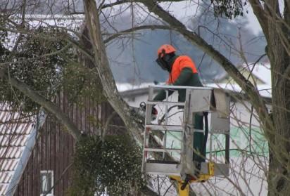 Pourquoi faut-il procéder à l'élagage d'arbre ?