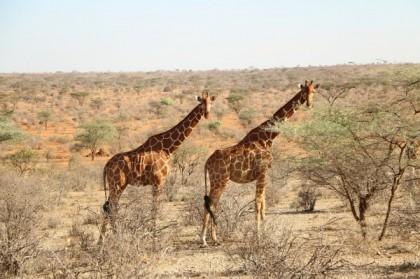 Quels sont les animaux à voir lors d'un safari en Namibie?