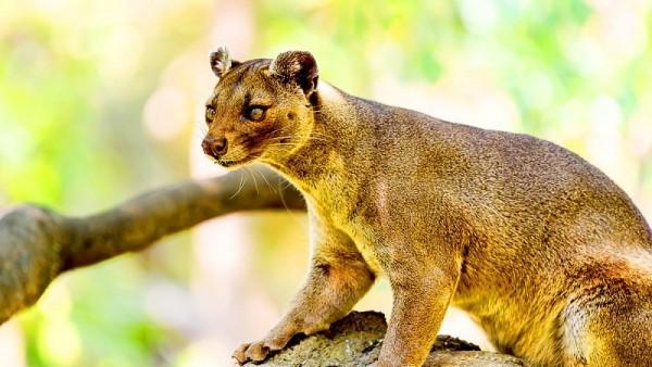 La faune à Madagascar: une richesse unique