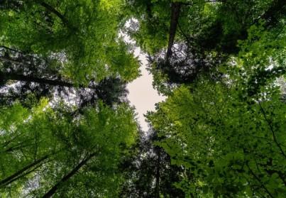 Élagage d'arbres au printemps: avantages et inconvénients
