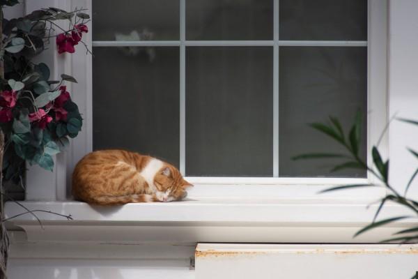 Quelle chatière choisir et comment l'installer ?