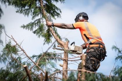 Réussir l'élagage des arbres et des arbustes