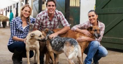 Comment éduquer votre chien avec succès ?