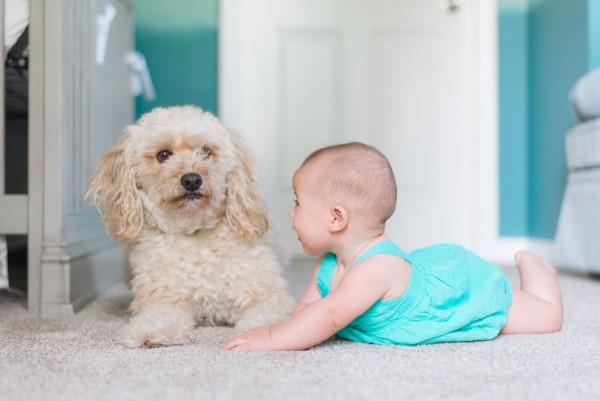 3 méthodes pour la sécurité du bébé à la maison