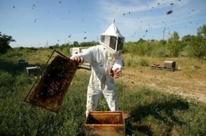 10 équipements indispensables pour l'apiculteur débutant