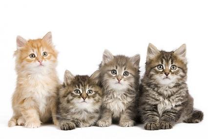 Tout savoir sur l'assurance maladie chat