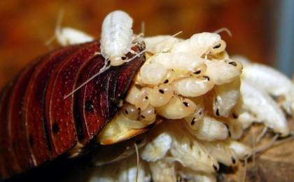 Désinsectisation pour tous types d'insectes