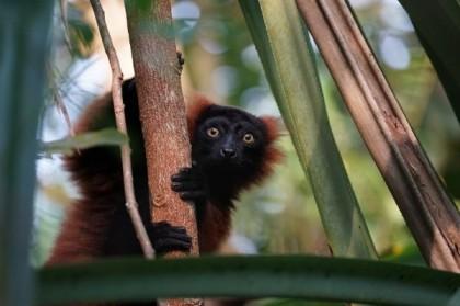 Tour-opérateur pour un séjour à Madagascar