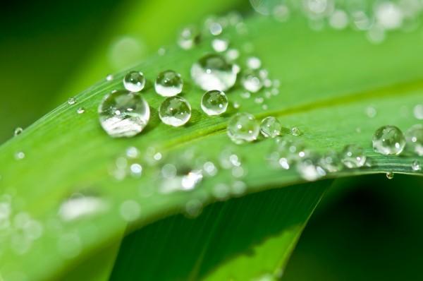 L'utilisation de l'eau de pluie