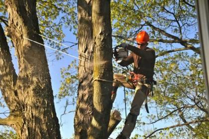 Comment faire pour bien élaguer les arbres?