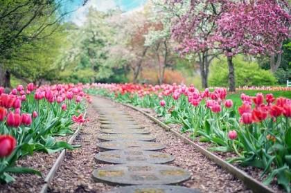 Conseils pratiques pour bien entretenir un jardin