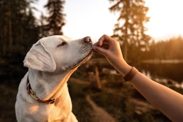 Top 3 des croquettes préférées des chiens