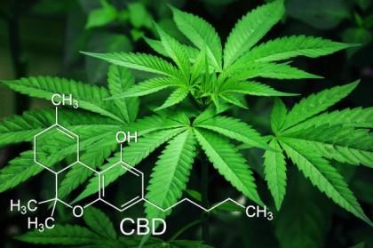 Où en est-on de la légalisation du cannabis en France ?