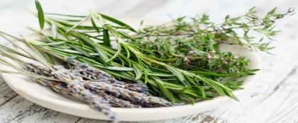 Les herbes aromatiques à utiliser en cuisine