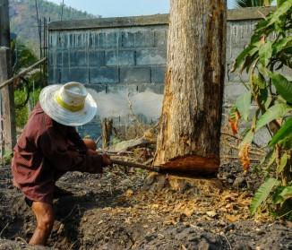 Abattage d'arbres : quelles précautions prendre ?