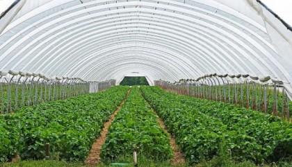 Les équipements utiles pour protéger les plantes