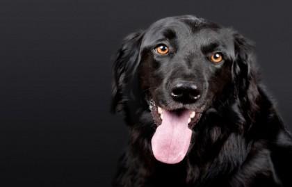 Comment empêcher son chien d'aboyer?