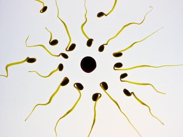 Préserver fertilité masculine : les dangers à éviter