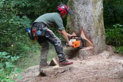 Comment se déroule l'abattage d'arbre par démontage ?