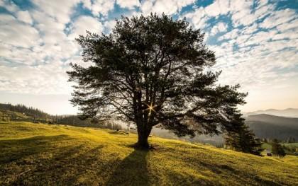 Solutions pour maximiser le potentiel de son terrain