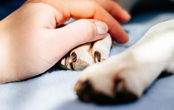 Anti-inflammatoire naturel : soignez vos animaux sainement